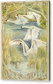 Flying Swans Acrylic Print by Morgan Fitzsimons
