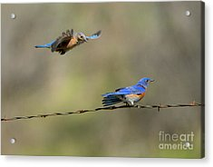 Flying To You Acrylic Print by Mike Dawson