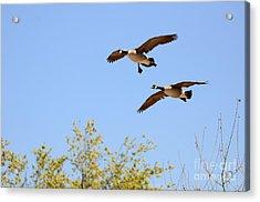 Flying Twins Acrylic Print
