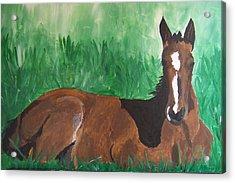Foal Acrylic Print by Krista Ouellette