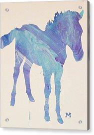 Foal Acrylic Print