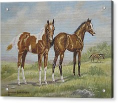 Foals In Pasture Acrylic Print by Dorothy Coatsworth