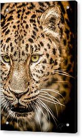 Focus Acrylic Print by Paul Neville