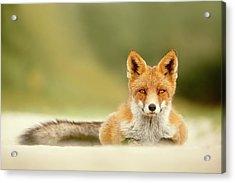 Focused Fox Acrylic Print by Roeselien Raimond
