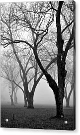Fog 1 Acrylic Print by Beverly Hammond