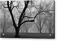 Fog 2 Acrylic Print by Beverly Hammond