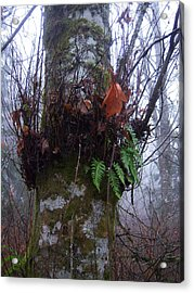 Fog And Ferns Acrylic Print by Ken Day
