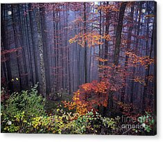 Acrylic Print featuring the photograph Fog And Forest Colours by Elena Elisseeva