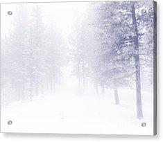 Fog And Snow Acrylic Print by Tara Turner