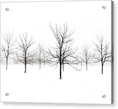 Fog And Winter Black Walnut Trees  Acrylic Print