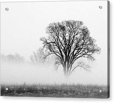 Fog Acrylic Print by Elizabeth Reynders