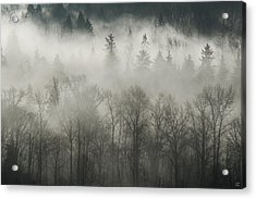 Acrylic Print featuring the photograph Fog Enshrouded Forest by Lisa Knechtel