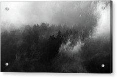 Fog Forest Acrylic Print