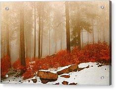 Fog II Acrylic Print