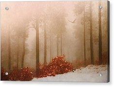 Fog IIi Acrylic Print