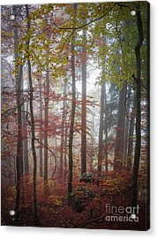 Acrylic Print featuring the photograph Fog In Autumn Forest by Elena Elisseeva