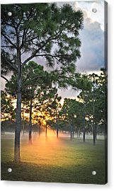 Fog In The Forest Acrylic Print by Debra and Dave Vanderlaan