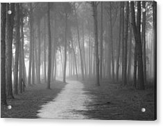Fog In The Forest Acrylic Print by Gary Bydlo