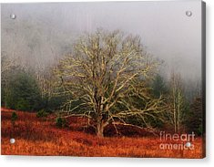 Fog Tree Acrylic Print by Geraldine DeBoer