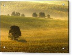 Foggy Fields Acrylic Print by Piotr Krol (bax)