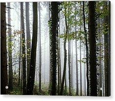 Foggy Forest Acrylic Print by Chevy Fleet