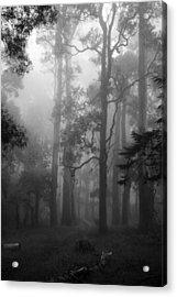 Foggy Forest Acrylic Print by Lois Romer