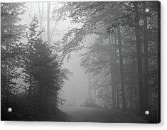 Foggy Forest Acrylic Print by Yago Veith