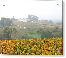 Foggy French Vineyard Acrylic Print