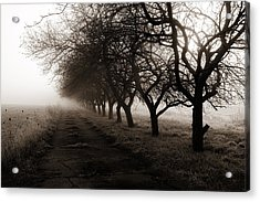 Foggy Lane Acrylic Print