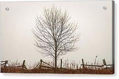 Foggy Lone Tree Hill Acrylic Print
