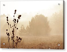 Acrylic Print featuring the photograph Foggy Meadow 2 by Scott Hovind