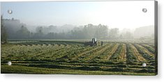 Foggy Morning Field 2 Acrylic Print by Janet  Telander