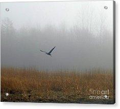 Foggy Morning Heron In Flight Acrylic Print by Helen Campbell