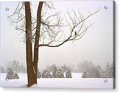 Foggy Morning Landscape 16 Acrylic Print by Steve Ohlsen