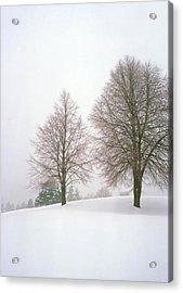 Foggy Morning Landscape 19 Acrylic Print by Steve Ohlsen