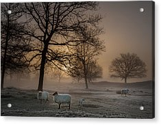 Foggy Morning Acrylic Print by Piet Haaksma