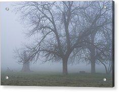 Foggy Morning Acrylic Print by Randy Bayne