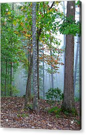 Foggy Morning Acrylic Print by Rosie Brown
