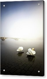 Foggy Morning View Near Bridge With Two Swans At Vltava River, Prague, Czech Republic Acrylic Print
