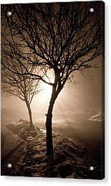 Foggy Night Acrylic Print by Elizabeth Richardson