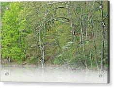 Foggy Spring Shoreline Hall Lake Acrylic Print