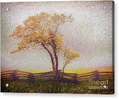Foggy Tree And Fence In The Blue Ridge Ap Acrylic Print by Dan Carmichael