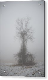 Acrylic Print featuring the photograph Foggy Walnut by Wanda Krack