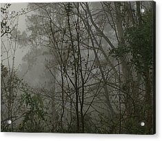 Foggy Woods Photo  Acrylic Print by Gina O'Brien