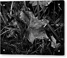 Foliage In The Grass Acrylic Print