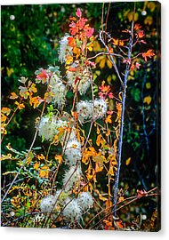 Foliage Twisted Colored Leaves Acrylic Print
