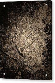 Foliage Acrylic Print by Wim Lanclus