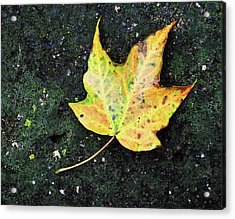 Acrylic Print featuring the photograph Foliation by Tom Druin