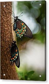 Acrylic Print featuring the photograph Follow The Leader by Cindy Lark Hartman