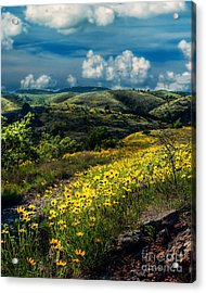 Follow The Path, Vertical Acrylic Print by Tamyra Ayles